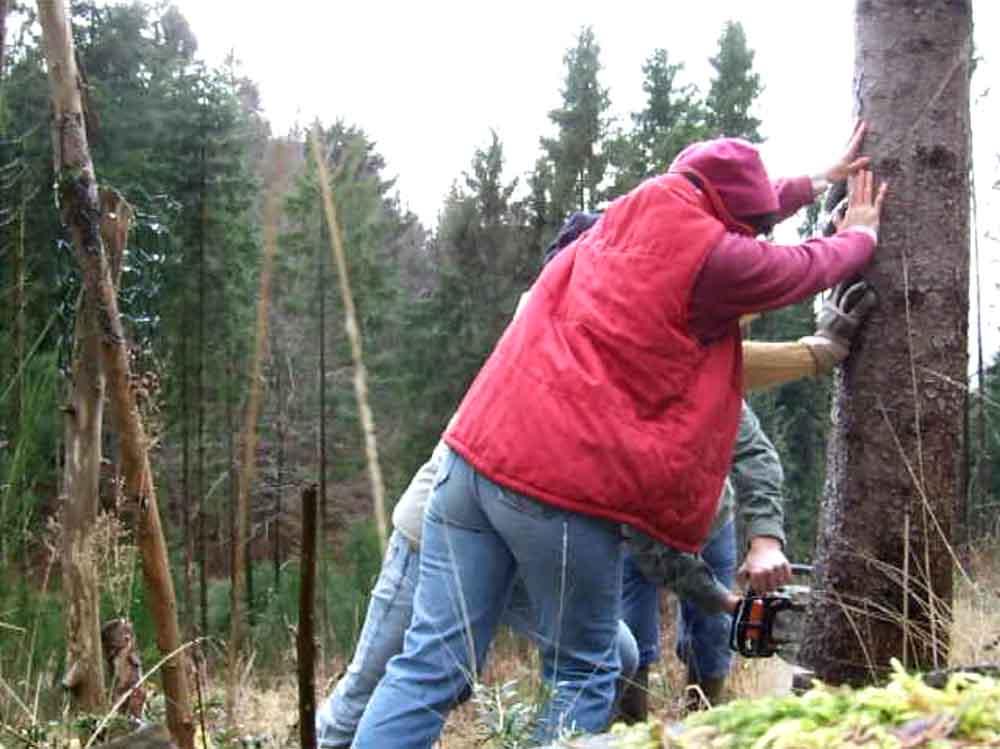 construction de la fuste Vosges bleu vert 3