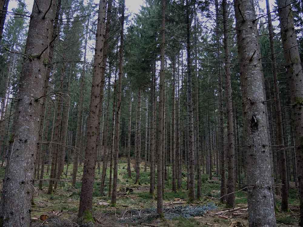 fuste Vosges bleu vert 3