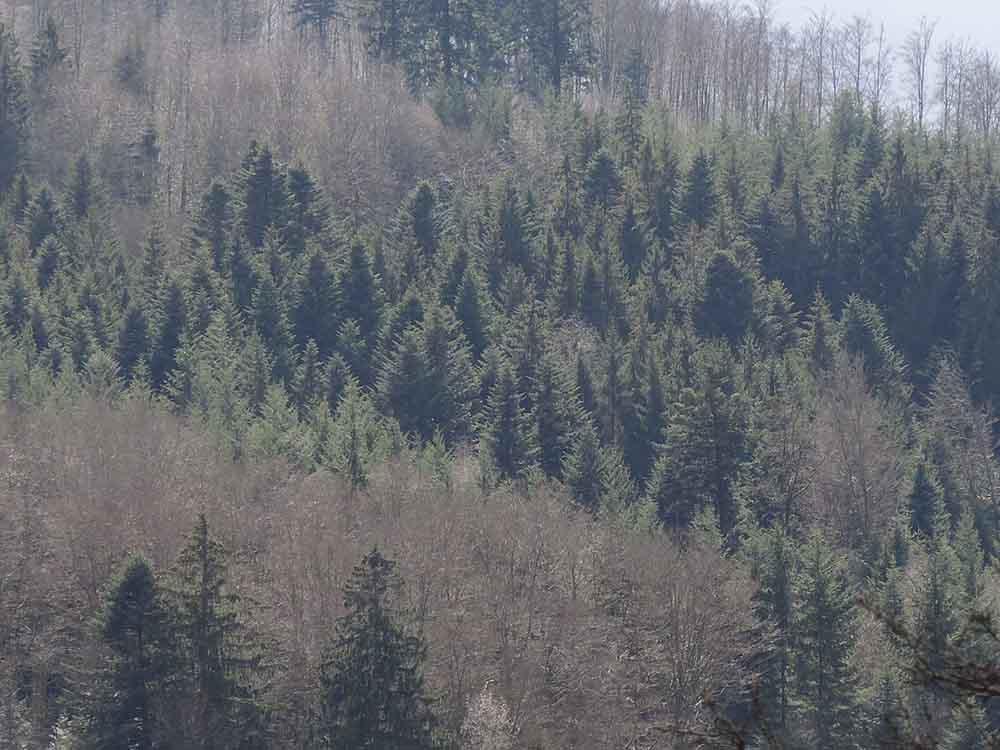 fuste Vosges bleu vert 4